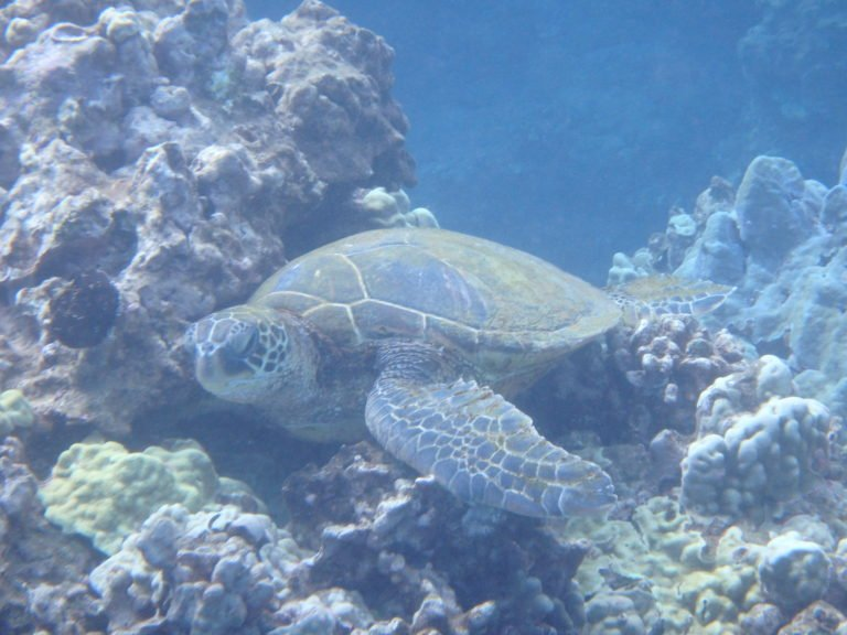 How to See Turtles Nesting and More on the Space Coast