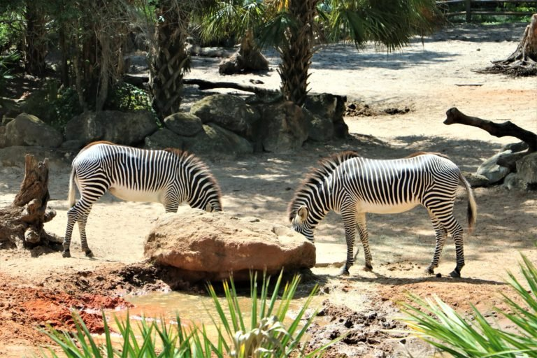 The Brevard Zoo – A Melbourne Florida Must-See